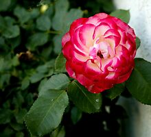 Flower 3 by Epopp300