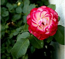Flower 3 Photographic Print