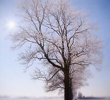 Snow covered tree by HJBH  Photography