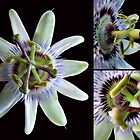 Flor de la Passion - Passion Flower by Madalena Lobao-Tello