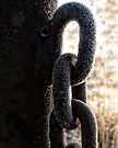 Chain by Carolyn  Fletcher