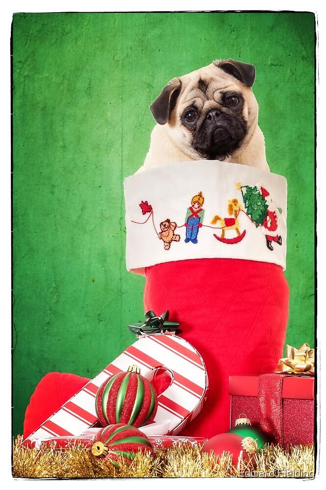 Christmas Stocking Pug by Edward Fielding