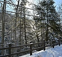 Snowy Overlook by wjwphotography
