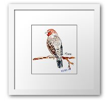 Red-headed Finch (Rooikop Vink) Framed Print