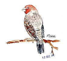 Red-headed Finch (Rooikop Vink) Photographic Print