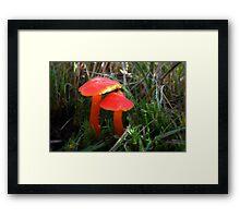 Scarlet waxcaps Framed Print