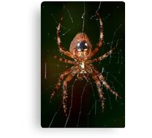 Orb Weaver 1 Canvas Print