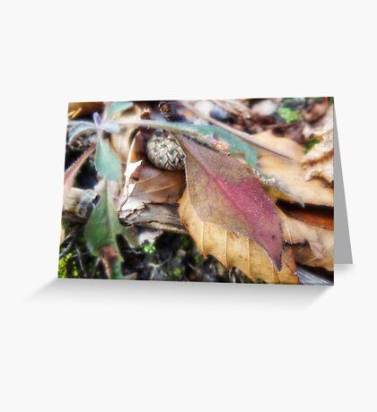 Acorn cap Greeting Card