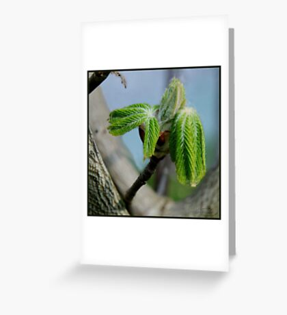 Unfolding life Greeting Card