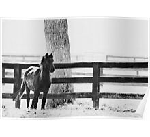 horse by the fence Poster