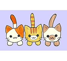 Three Cute Kittens Photographic Print