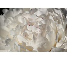 Hint of Red in a Luscious Sea of Petals Photographic Print