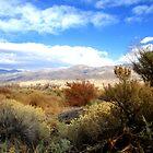 Beautiful Desert by marilyn diaz