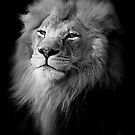 king black and white by martym