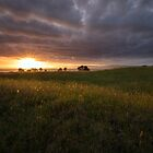 Otuataua Stonefields Part II by earlcooknz