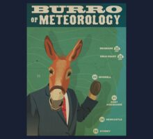 Burro of Meteorology - Inverell NSW by Chris Rees