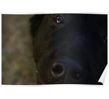 Pet Portrait - Black Labrador Poster