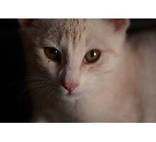 Pet Portrait - Ginger Kitten Photographic Print