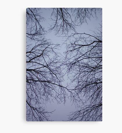 sky veins Canvas Print