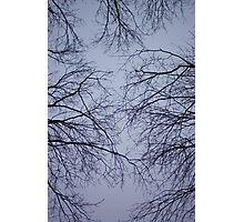 sky veins Photographic Print