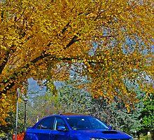 Autumn Blue by katsie78