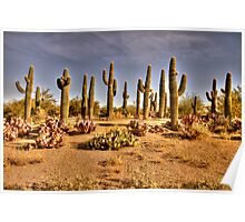 Cactus Patch Poster