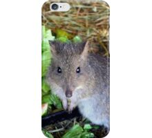 Potoroo iPhone Case/Skin