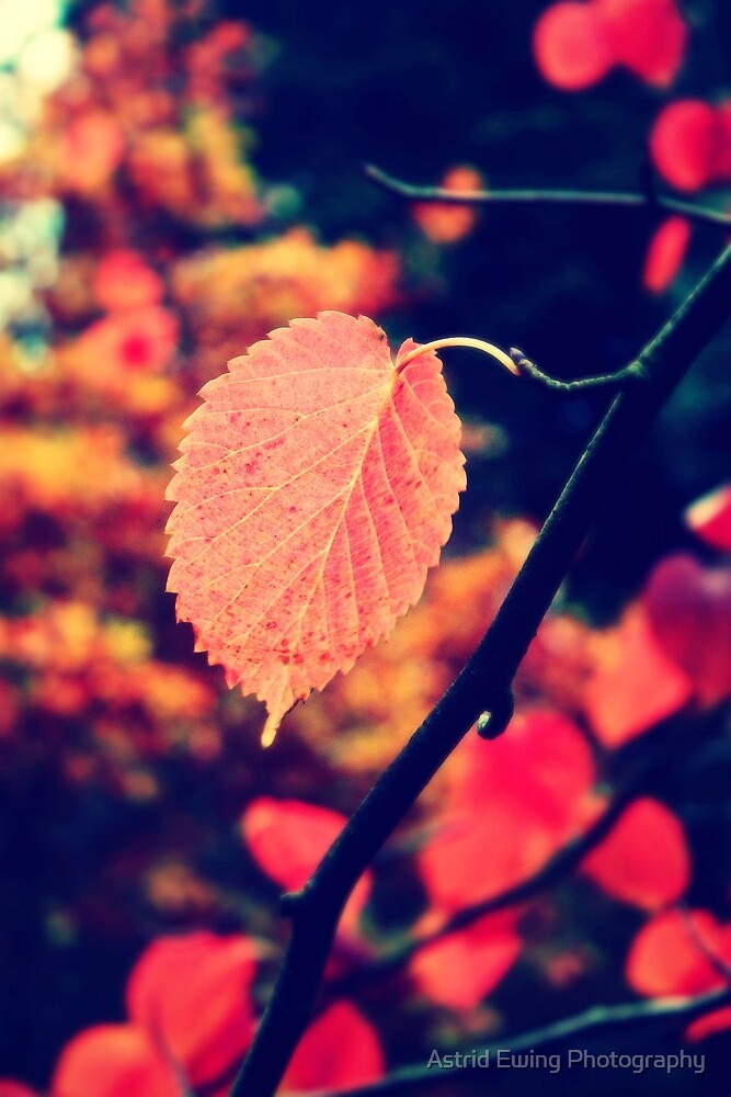 'Fall' in Love by Astrid Ewing Photography