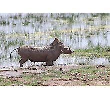 """""""That was good!!!"""" Warthog After a Mud Bath Photographic Print"""