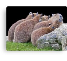 Safety in Numbers Canvas Print
