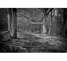 Chevin Forest Park #3 Mono Photographic Print