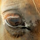 Eye on Joshua by CherylBeck