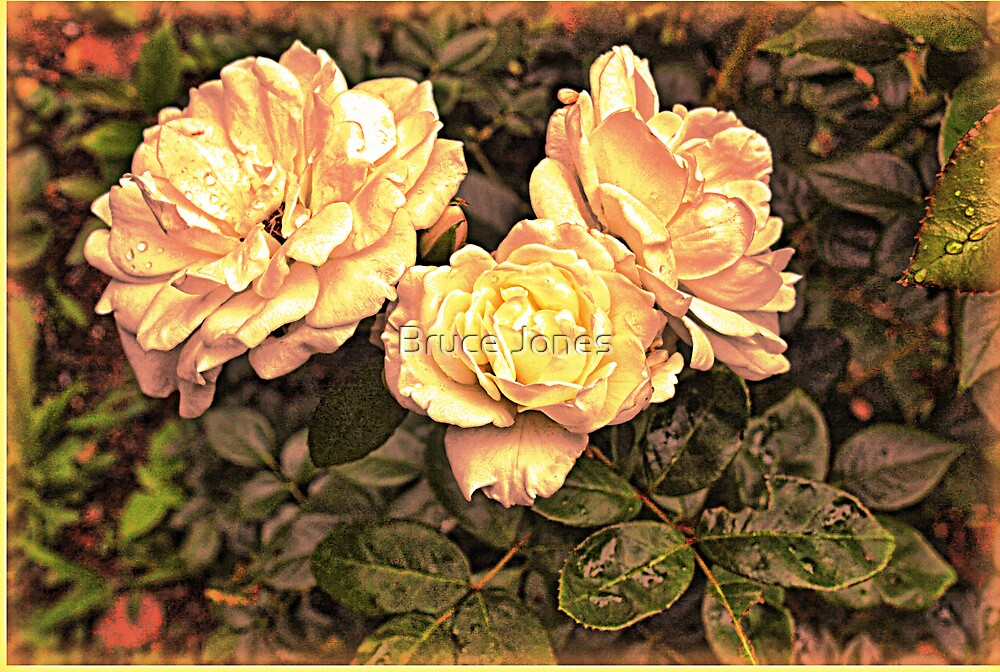 """Vintage Rose"" by Bruce Jones"