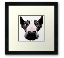 Front Faced Bull Terrier Framed Print