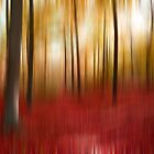 Autumn forest by Angela Bruno