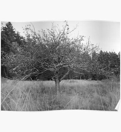 Little Apple Tree  Poster