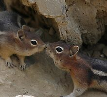 Chipmunk Love by Maria Elena  Black