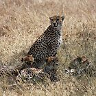 Cheetah and cubs by Jane Horton