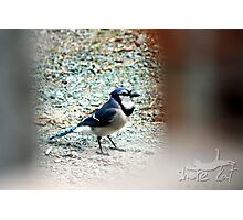 Blue Jay Way Photographic Print