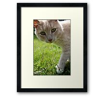 Sirius Cat Framed Print