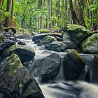 Cedar Creek at Mt Tamborine by PhotoByTrace