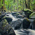Cedar Creek at Mt Tamborine by PhotoByTrace
