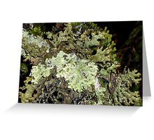 Green Forest Lichen, Cradle Mountain, Tasmania, Australia. Greeting Card