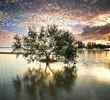 Once upon a Mangrove by PhotoByTrace