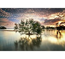Once upon a Mangrove Photographic Print