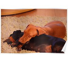 Daschunds enjoying open log fire Poster