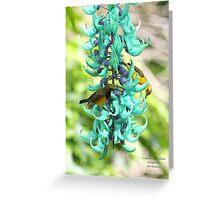 Sunbirds on Jade vine Greeting Card