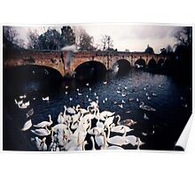 Swans Poster landscape idillic surreal river england art print card Poster
