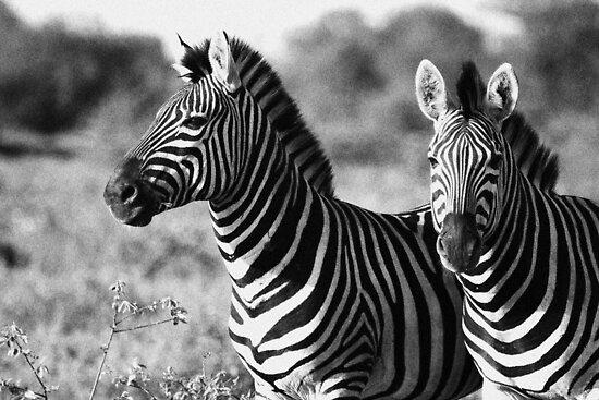Black and white by Dan MacKenzie