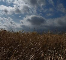 Harvest before the storm by mashdown